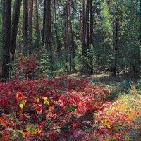 Осенних листьев солнечное эхо... :: Лесо-Вед (Баранов)