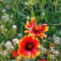 Цветы аномального лета Фото №2 :: Владимир Бровко