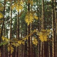 Сентябрь в лесу. :: Михаил Полыгалов