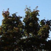 осень на дворе :: linnud