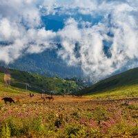Великолепие гор! :: Андрей Гриничев