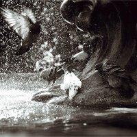 Купание голубей 2 :: Алена Афанасьева