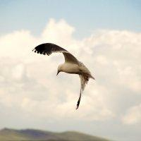 Чайка :: Виктория Большагина