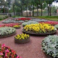 Цветы на придворцовой территории :: Светлана