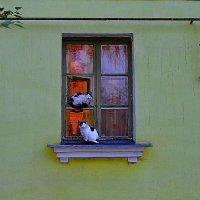 Коты пррилетели :: Сергей Землянский