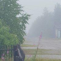 утренний туман... :: Екатерина Тележенко