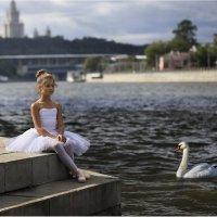 Белые лебеди :: Виктория Иванова