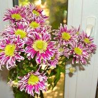 Эстафетацвета. Фиолетовое воскресенье - цветы на 9 лет свадьбы :: Наталья (ShadeNataly) Мельник