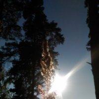 Осенние солнышко :: Оксана Романова