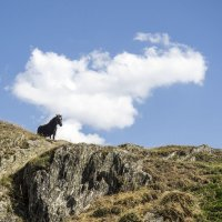 Облачный конь ☺ :: Юрий Казарин