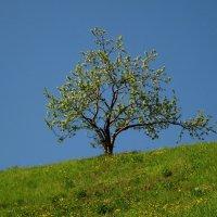 Весна во всей красе... :: Павел Зюзин