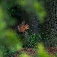 ...да орешки все грызёт :: Катарина Винниченко