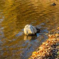 Камень :: Константин Шабалин