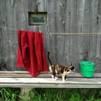 Просто кошка :: Бажина Нина