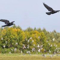 Птицы :: Nn semonov_nn