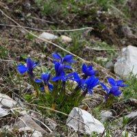 цветы в горах :: Михаил