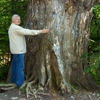 Реликторое дерево в долине реки Снежная :: Анатолий Иргл