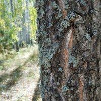 Лес :: Артём Чехнёв