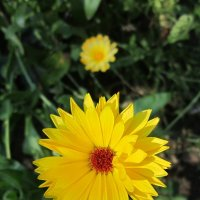 Яркий цветок :: Дмитрий Никитин