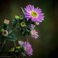 Осени цветы. :: Дмитрий Скубаков