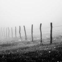 Пилиг в тумане :: Мария Мятова