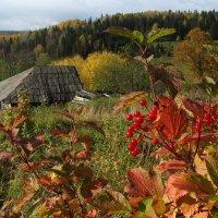 Краски сентября :: Валерий Чепкасов