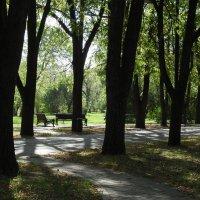 Жаркий сентябрь в дендрарии КГАУ :: Алексей Меринов