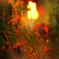 ...на  закате................... :: Георгий Никонов