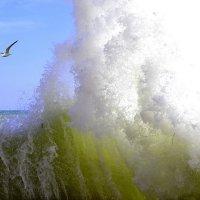Волна и чайка :: Виктор Шандыбин