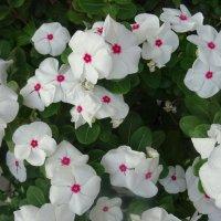 Городские цветы! :: татьяна