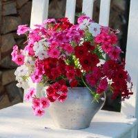 Флоксы - цветы сентября :: Наталья Казанцева