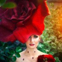 Роза :: Вилена Романова