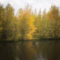 Осень на пруду :: Наталья Копылова