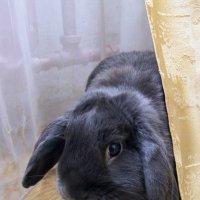 Кролик Пепе: потому что пепельный :: Александр Рябчиков