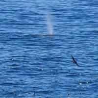 Дыхание серого кита :: Сергей Рычков