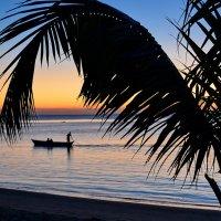 Мадагаскар :: Александр