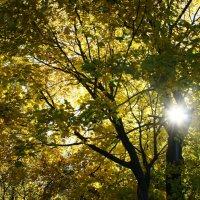 Осень желтоглазая :: Елена Павлова (Смолова)