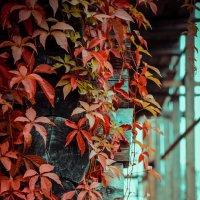 Осень.. :: Алёна Дмитриевна