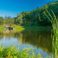 Митинский пруд. :: kvstu