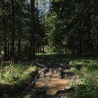В лес за грибами... :: Владимир Безбородов
