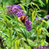 Бабочка :: Сергей Михайлов