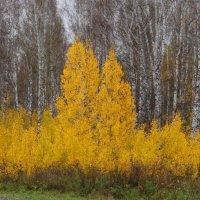 Сибирская Осень :: Татьяна Аистова