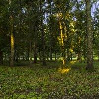 Первый солнца луч. :: Инна Щелокова
