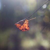 осень... :: Юля Грек