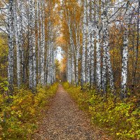 Осенний лес. :: Виктор Шпаков