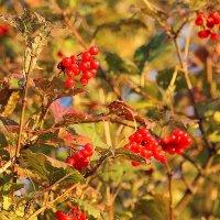 Осень золотая... :: Tatiana Markova