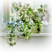 Цветы вишни :: Наталия Лыкова