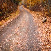 Осенняя дорога :: Boris Altynnikov