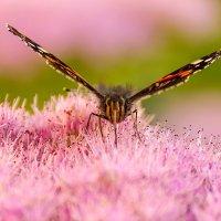 Последняя бабочка сентября :: Александр