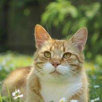 Лето,солнце,ромашки!!! :: Svetlana Sneg
